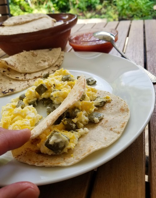 Cactus With Egg Taco, Nopalitos Con Huevo, best with fresh corn tortillas and fresh cactus paddles
